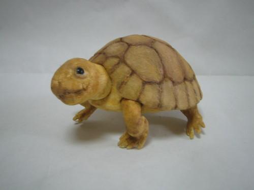 Tortoise・カメ