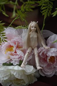 Photo_21妖精