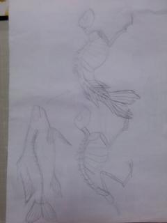 猿+魚=人魚?
