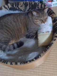 手作りの猫の枕