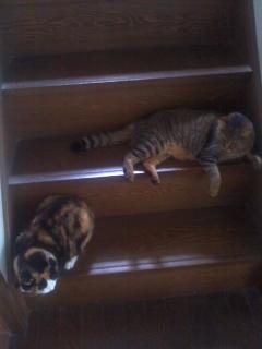 歩きにくい階段