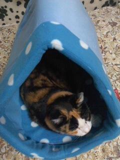 猫ベッドを買う