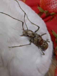 蟻を組み立て