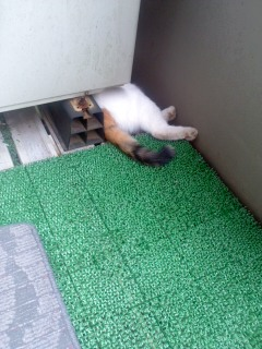 お前の猫は挟まっていると言われて
